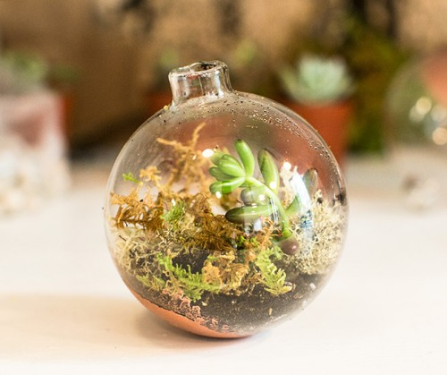 DIY Christmas Terrariums With Plants And Not Only Shelterness - Amazing diy non living terrarium
