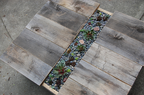 Diy Coffee Table With Built In Succulent Centerpiece