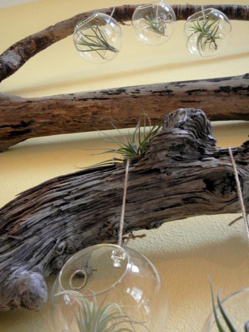 Diy Driftwood And Terrarium Wall Decorations