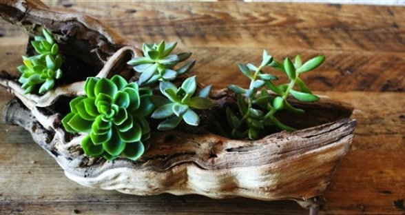 succulent driftwood centerpiece