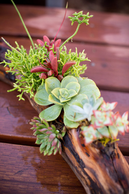 long-lasting succulent centerpiece (via houzz)