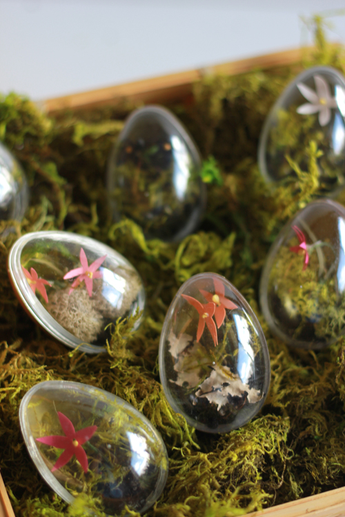 Easter egg terrariums (via shelterness)