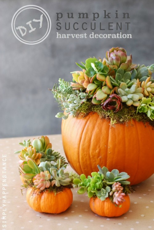 pumpkin and succulent centerpiece (via simplyhappenstance)