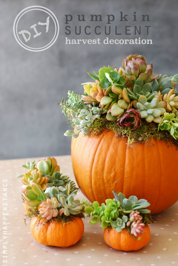 pumpkin and succulent centerpiece