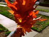 diy-floating-fall-leaves-garland-for-home-decor-2