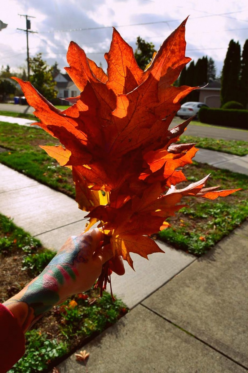 Picture Of diy floating fall leaves garland for home decor  2