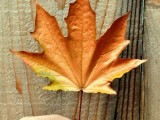 diy-floating-fall-leaves-garland-for-home-decor-3