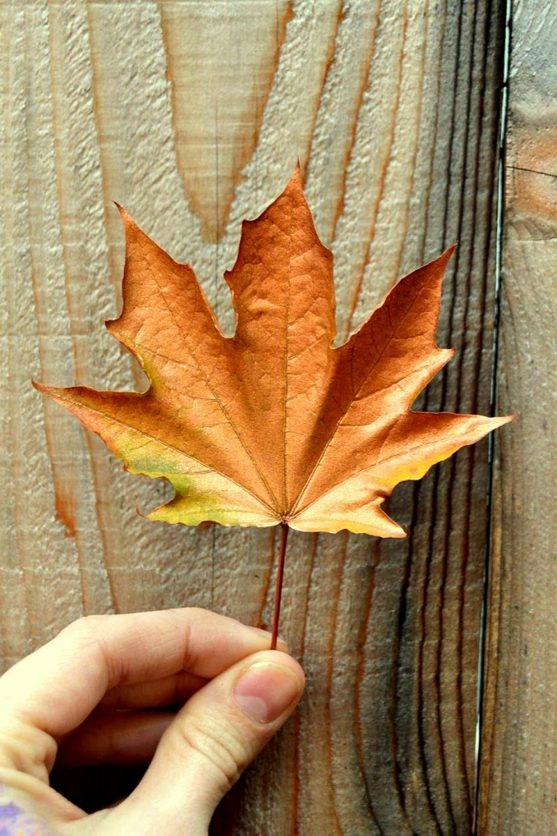 Picture Of diy floating fall leaves garland for home decor  3