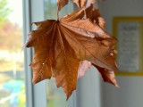 diy-floating-fall-leaves-garland-for-home-decor-5