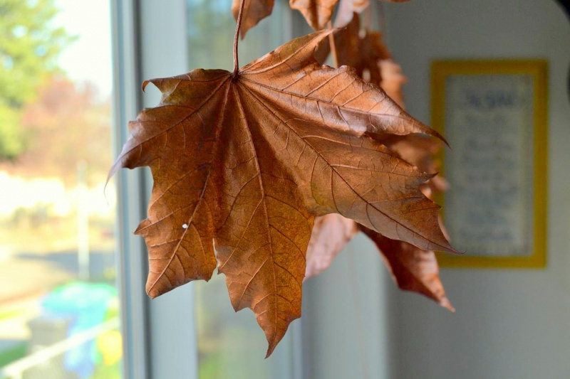 Picture Of diy floating fall leaves garland for home decor  5