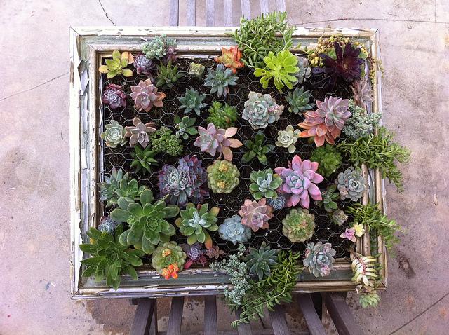 DIY Framed Hanging Succulent Garden