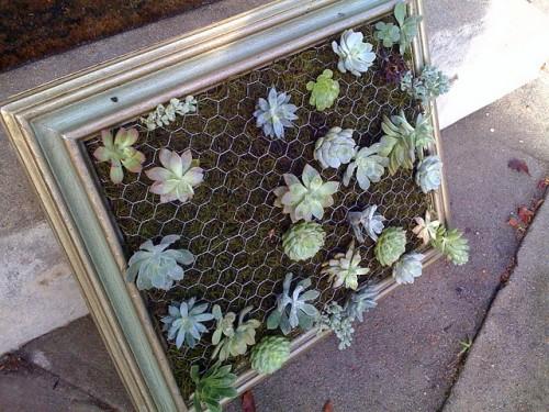 Diy Framed Vertical Succulent Garden