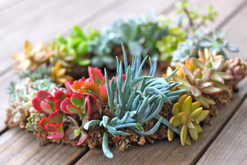 Diy Gorgeous Succulent Wreath