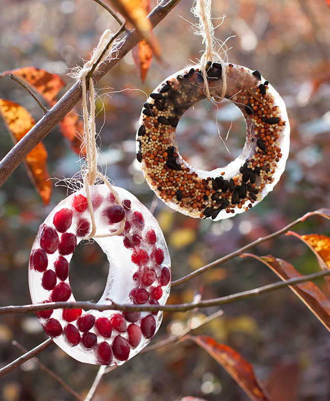 birdseed ice ornaments