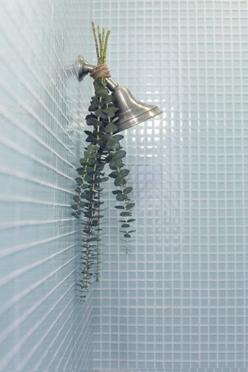 eucalyptus for shower (via blog)
