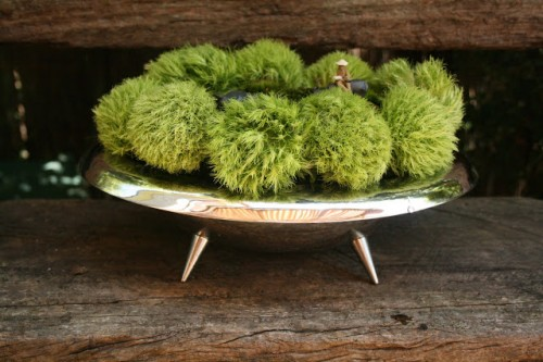 moss centerpiece (via spiderflower)