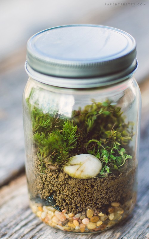 moss terrarium (via parentpretty)