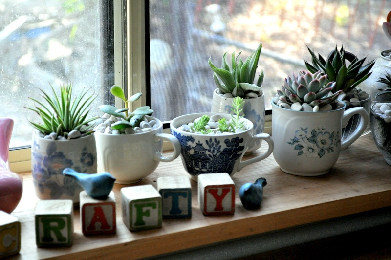 DIY Indoor Teacup Succulent Garden Shelterness