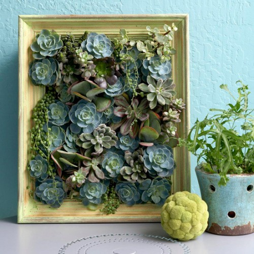 DIY Living Succulent Artwork