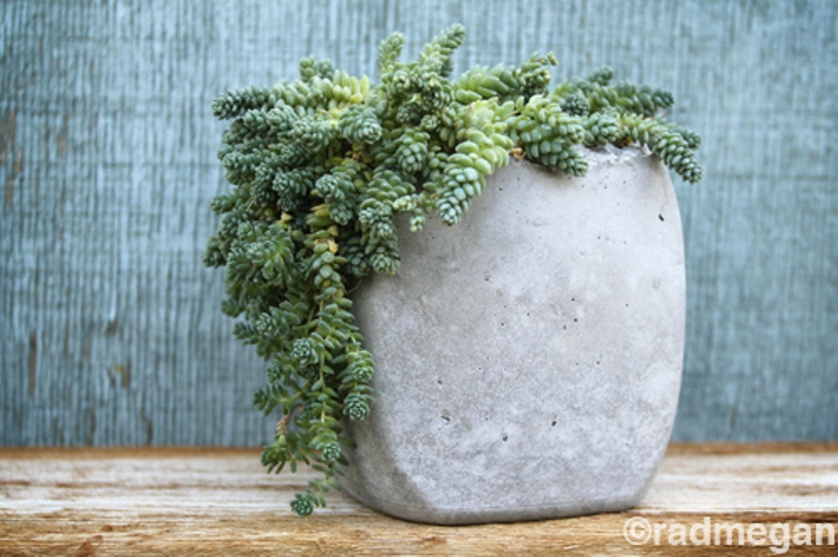 Picture Of Diy Minimalist Concrete Pots