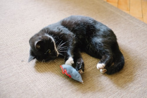 DIY Mouse-Shaped Cat Toy Of Felt
