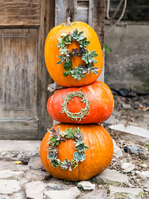 succulent worded pumpkins (via thehousethatlarsbuilt)