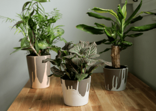 DIY Originally Dipped Ceramic Planters