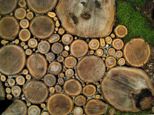 Diy Pathway Of Wood Slices