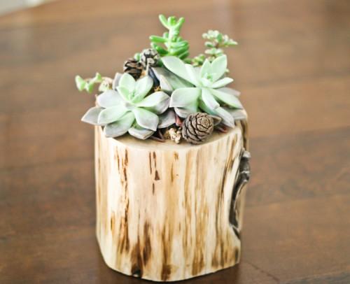 Stylish DIY Planter Of A Fallen Tree Piece