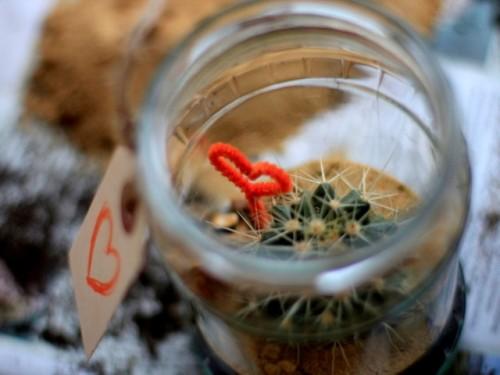 Diy Recycled Cactus Terrarium