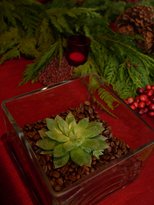 Picture of diy small succulent centerpiece for christmas Small christmas centerpieces