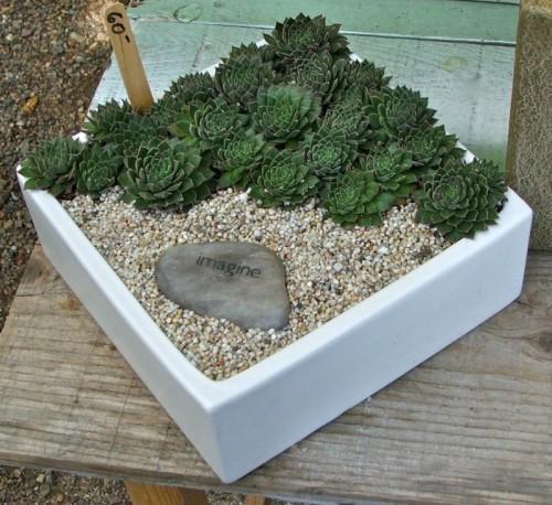 Diy Succulent Container