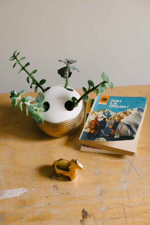 Diy Succulent Planter From A Toothbrush Holder