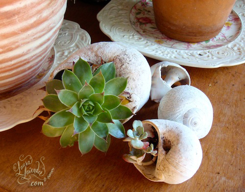 DIY Succulent Seashell Planters To Make A Small Succulent Garden