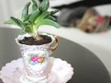 Diy Succulent Teacup Garden