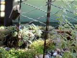 Diy Tabletop Miniature Garden