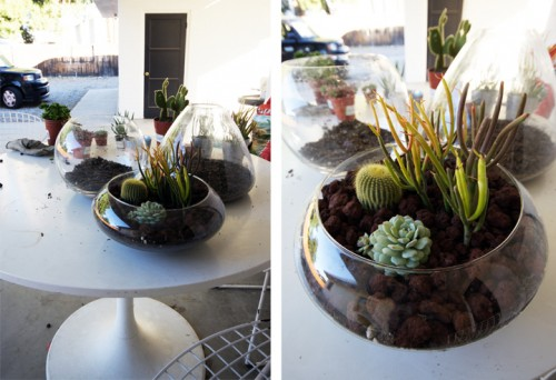 Diy Tabletop Terrarium