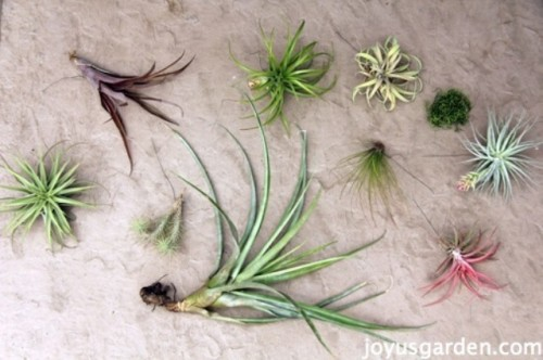 Diy Tillandsia Garden Of A Big Terra Cotta Star Ball