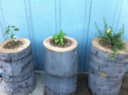 DIY Tree Stump Planters