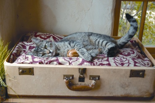 vintage suitcase cat bed (via motherearthliving)