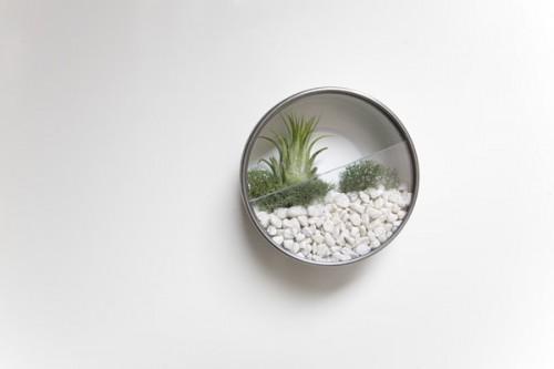 Diy Wall Terrariums
