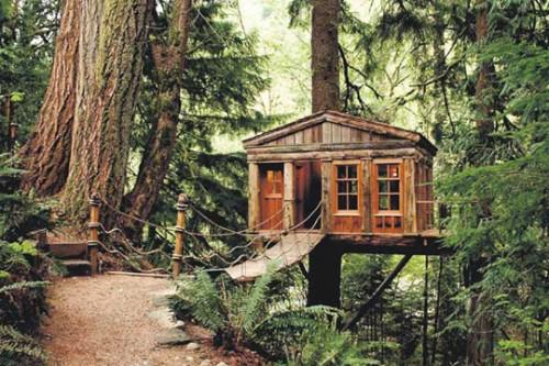 Dream Tree Houses