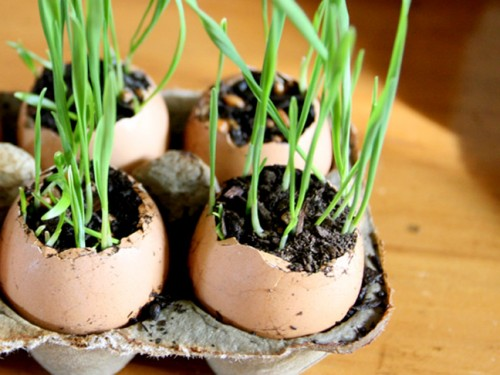 wheat grass eggs (via momtastic)