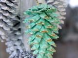 easy-diy-festive-pinecone-swag-8