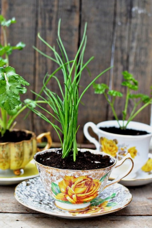 Exquisite Herb Home Garden As Mother's Day Decoration