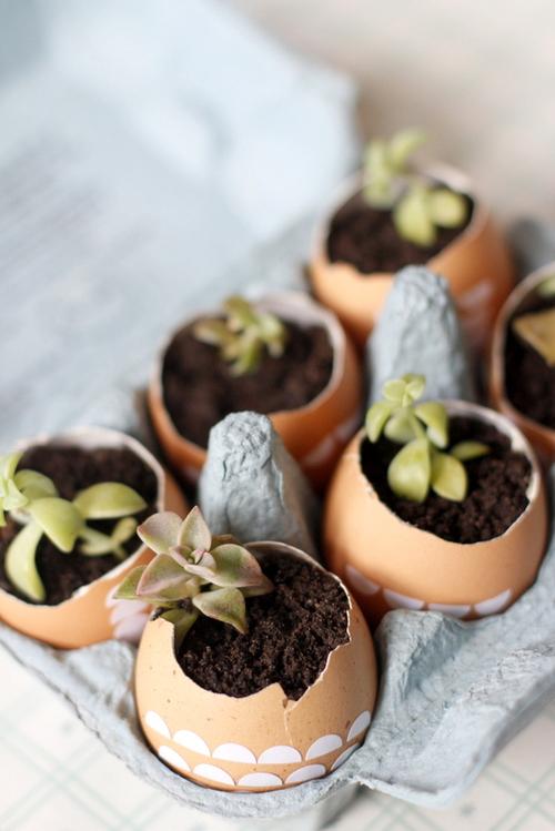 egg shell planters (via whatyousowblog)