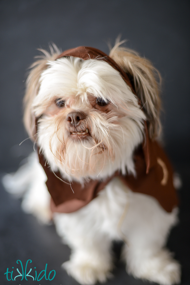 Picture Of fun diy ewok no sew dog costume  1