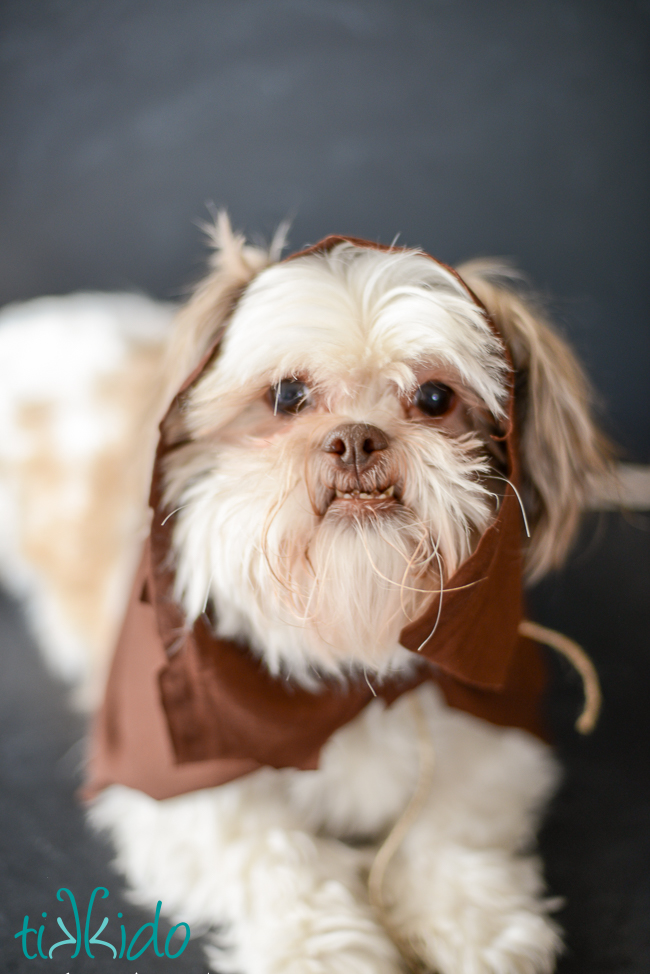 Picture Of fun diy ewok no sew dog costume  2