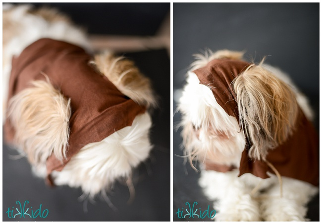 Picture Of fun diy ewok no sew dog costume  5