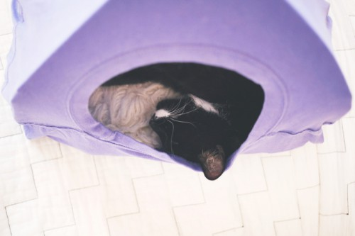 Funny And Original DIY T Shirt Cat Tent